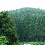疲れ目を回復させるには毎日10分間遠くの緑を眺めよう